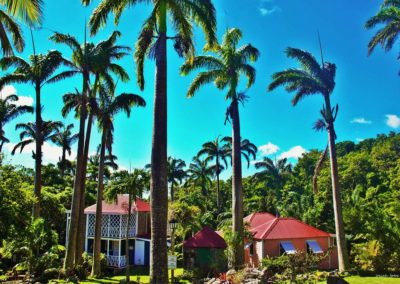 Tall palm trees and cottages